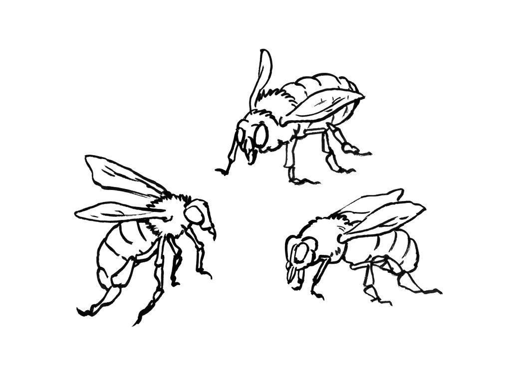 115 dessins de coloriage abeille imprimer sur page 6 - Coloriage d abeille ...