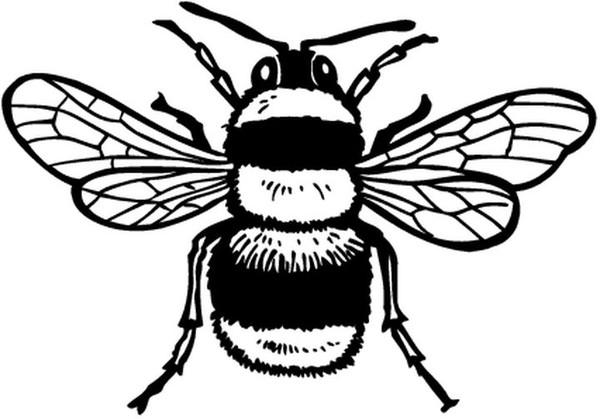coloriages animaux abeilles centerblog