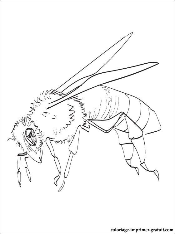 coloriage et dessin abeille à imprimer coloriage à imprimer