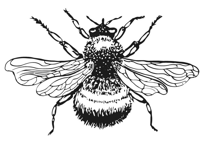 bumble abeille coloriage page dessin gratuit à colorier site