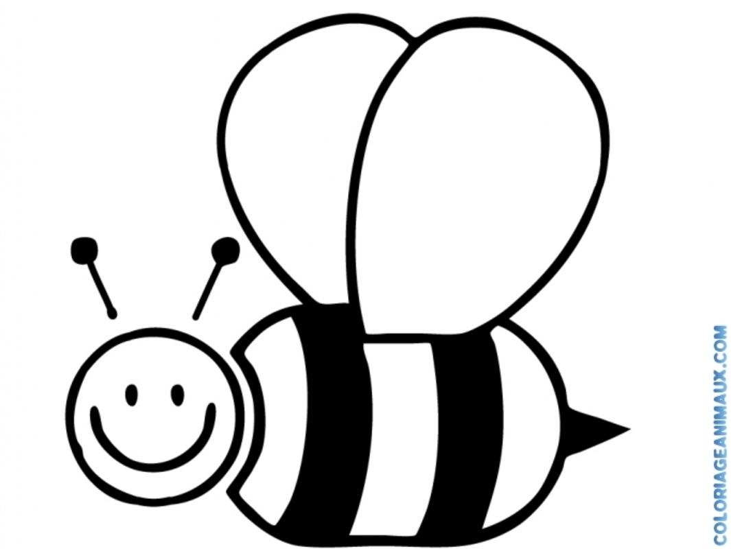 coloriage abeille qui vole