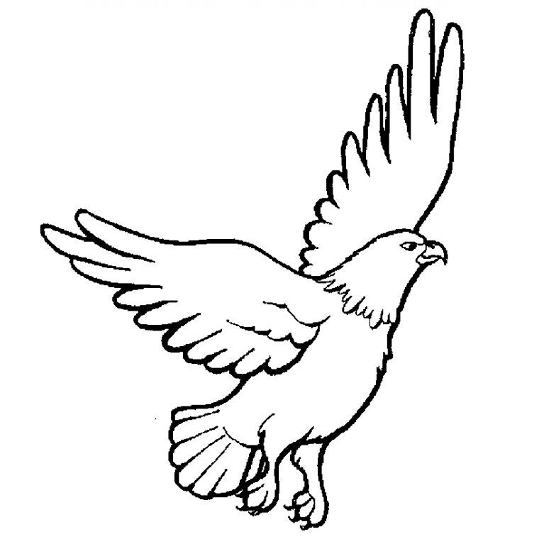 imprimer le coloriage aigle pour imprimer le coloriage aigle clique