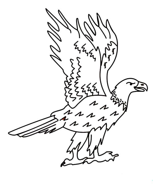 aigle dessin à colorier here home bald aigle funny bald aigle coloriage
