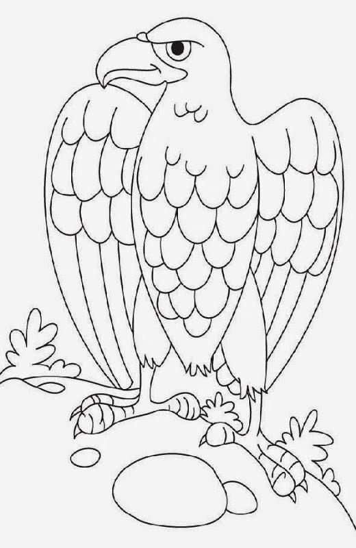 aigle dessins à colorier dessins gratuit à colorier