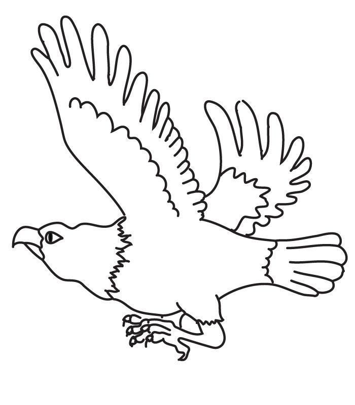 coloriage aigle