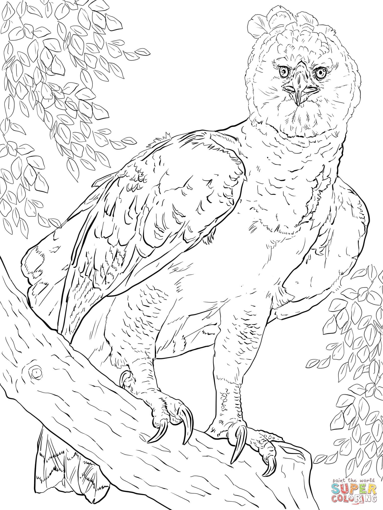 american harpy aigle coloriage en ligne