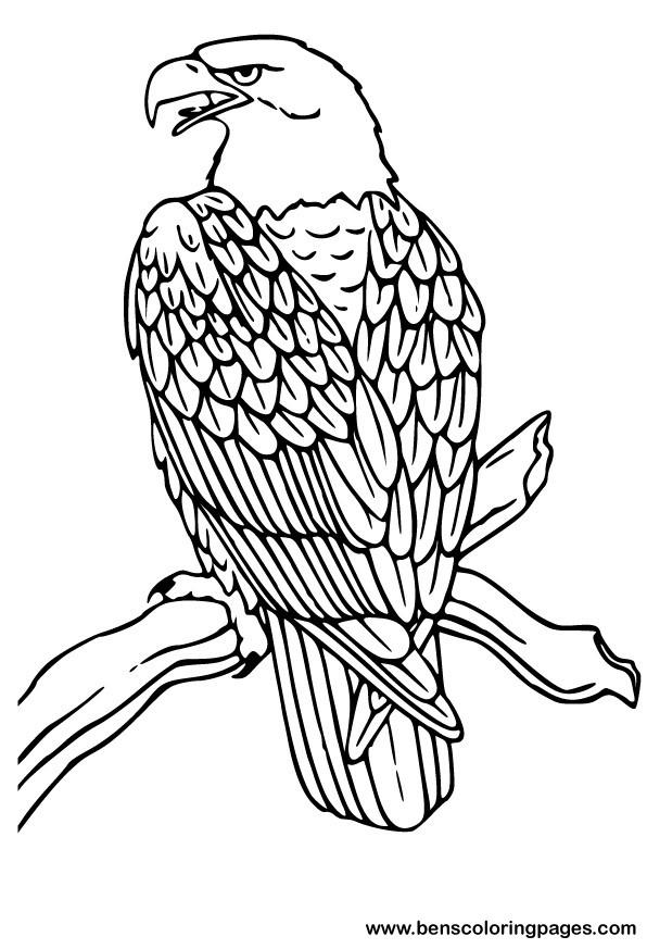 aigle image à dessiner dessin gratuit à colorier site