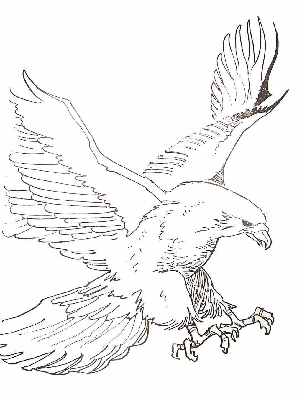 55 dessins de coloriage aigle imprimer sur - Dessin de aigle ...