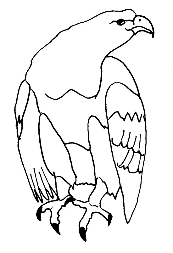 coloriage animaux : aigle