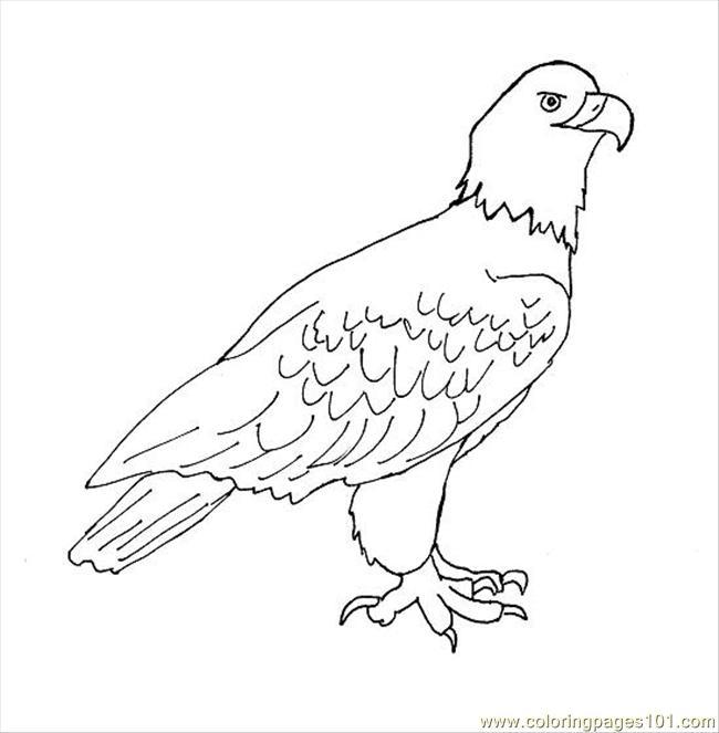 dessins à colorier aigle drawing (birds aigle) gratuit à imprimer
