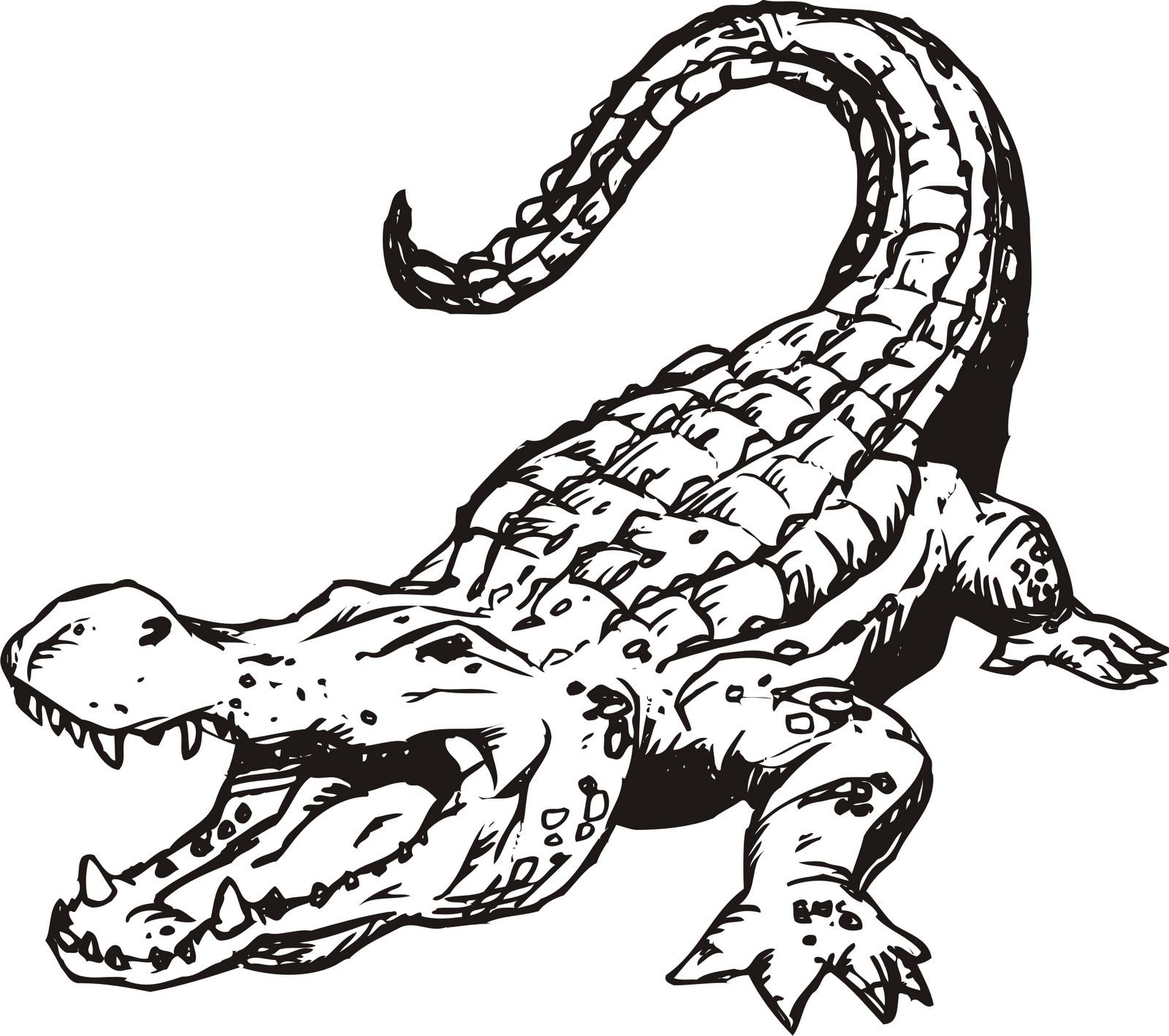 S lection de coloriage alligator imprimer sur laguerche - Image crocodile dessin ...