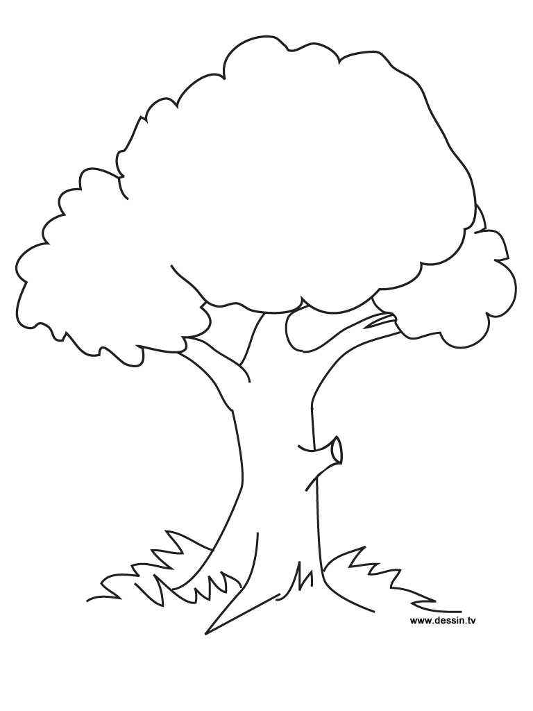 dessins à colorier arbres