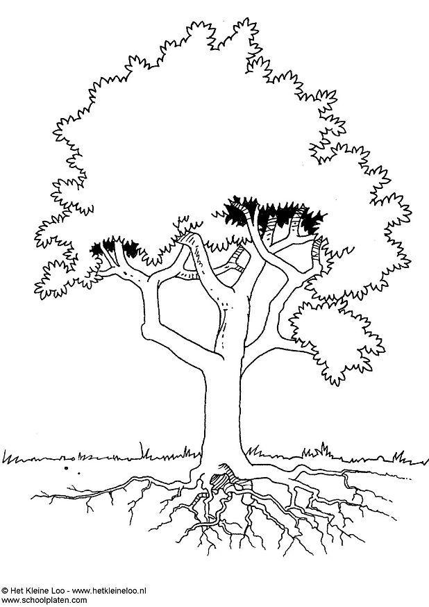 arbre coloriage dessin gratuit à colorier site