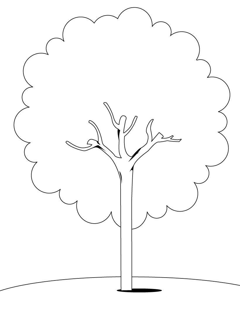 arbre dessins à colorier dessins à colorier a imprimer