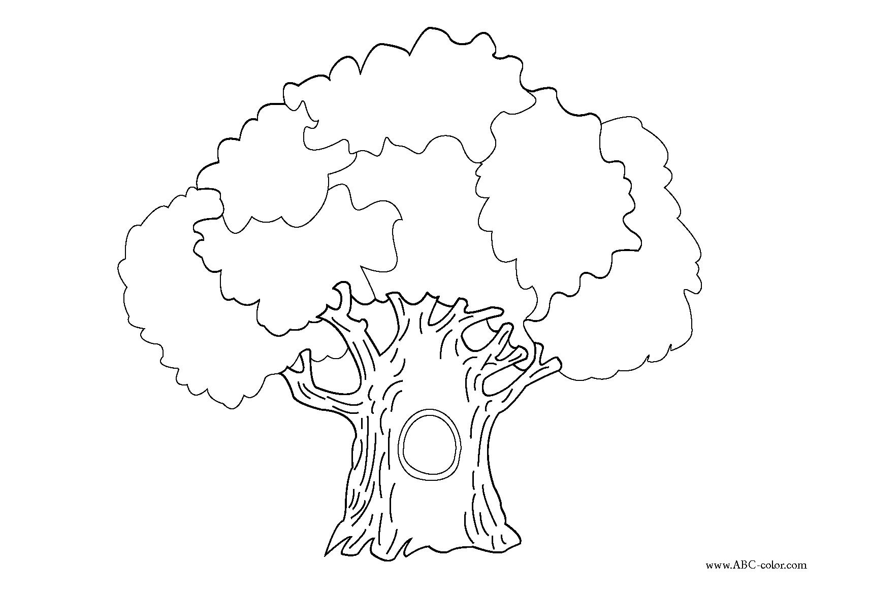 raster coloriage oak arbre ?
