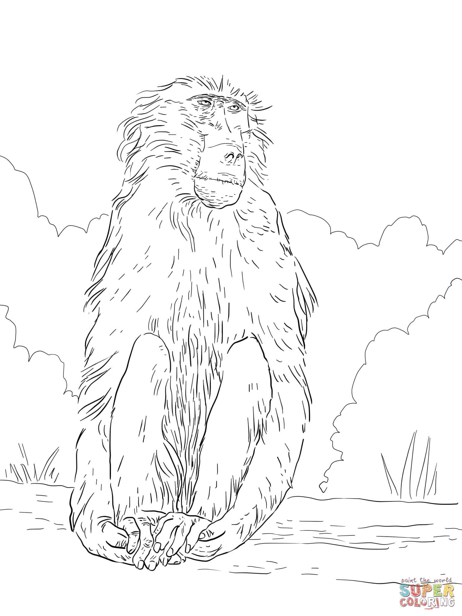 S lection de coloriage babouin imprimer sur page 2 - Dessin de babouin ...