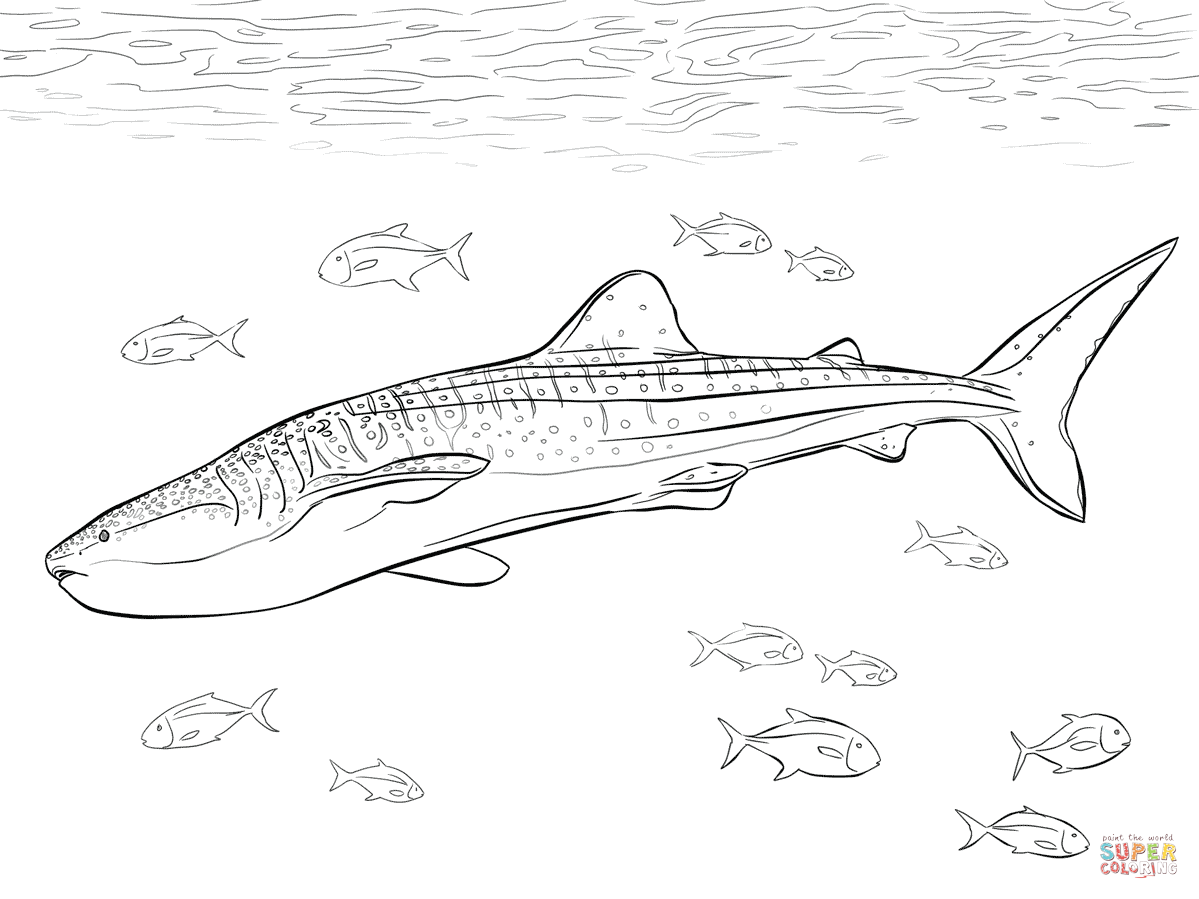 Coloriage baleine a imprimer