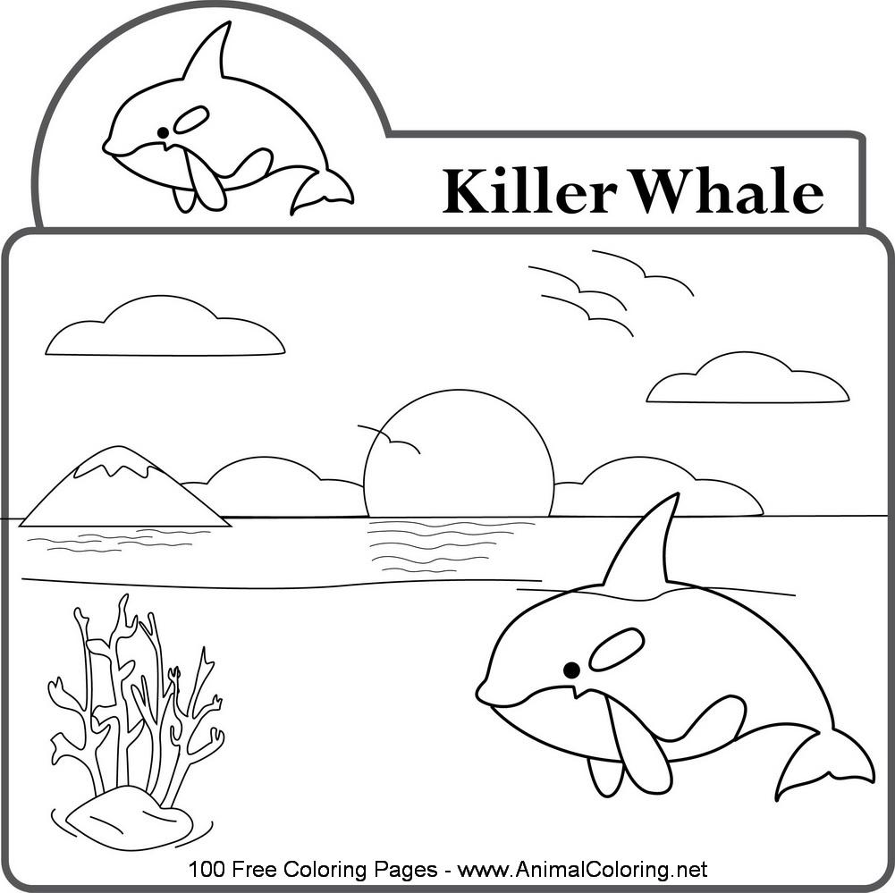 Dessin de baleine a colorier et imprimer