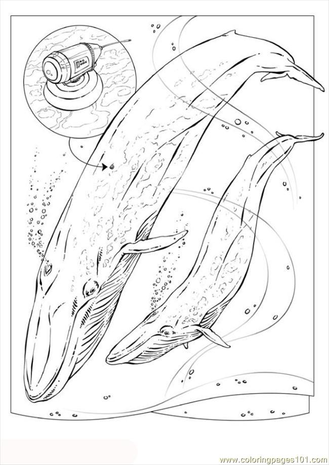 Dessin gratuit baleine a imprimer et colorier