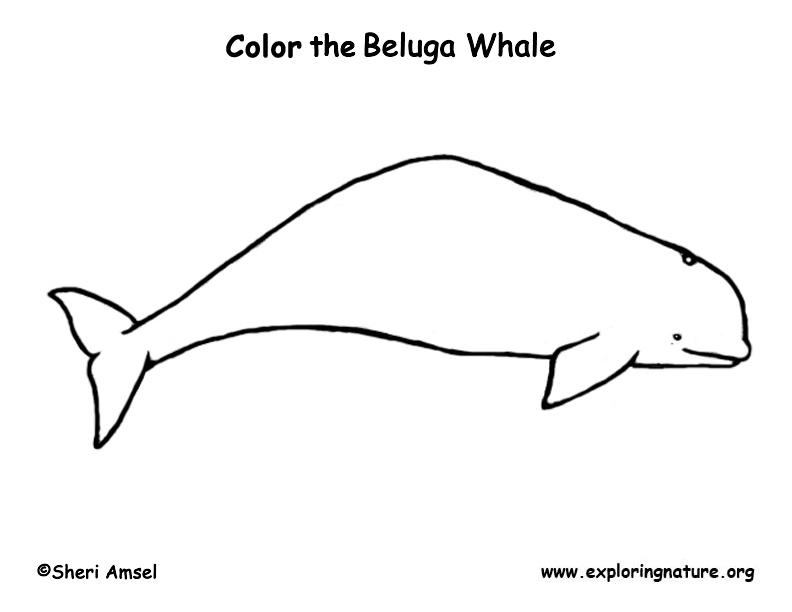 Coloriage baleine gratuit