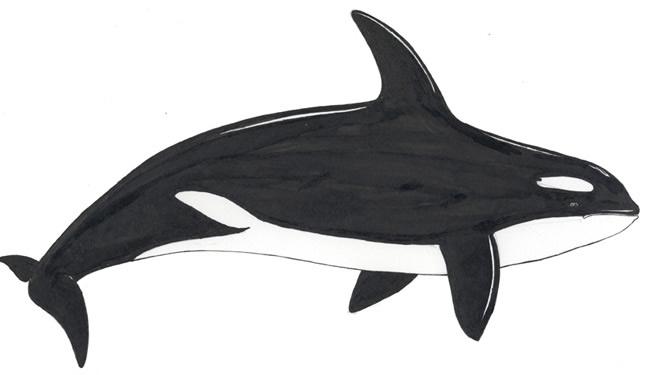 Coloriage baleine à imprimer
