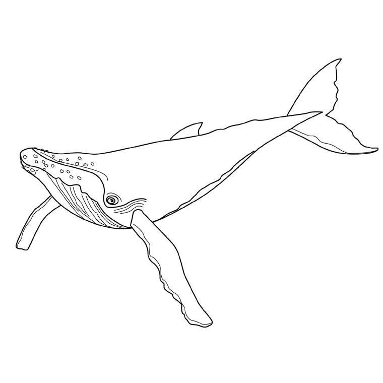 Dessin de baleine pour imprimer et colorier