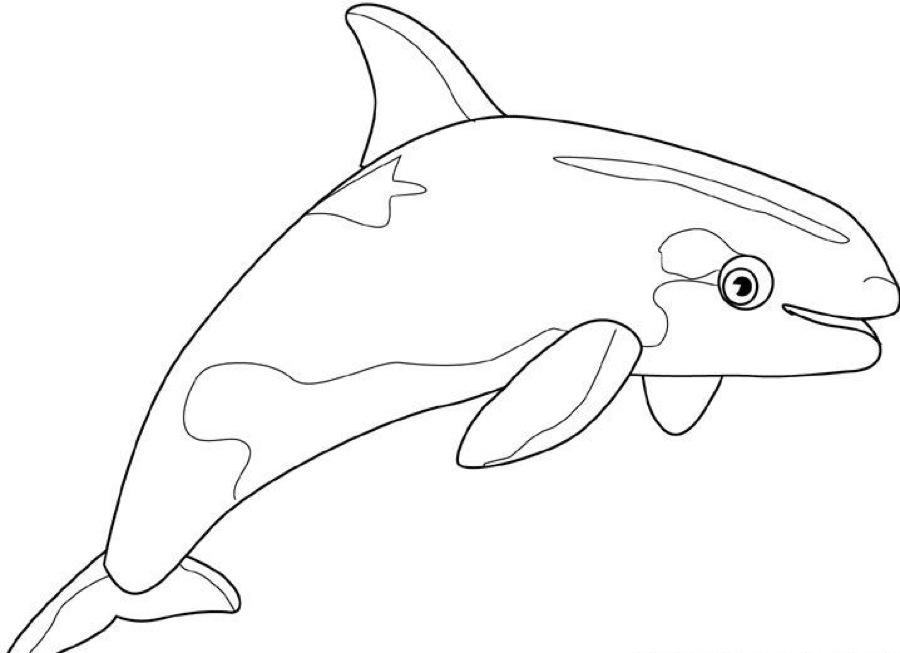 Dessin de baleine