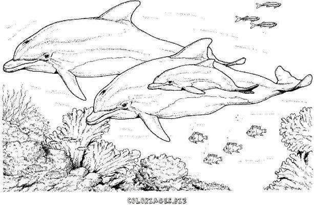 Coloriage de baleine a imprimer