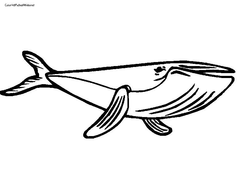 Coloriage de baleine gratuit a imprimer