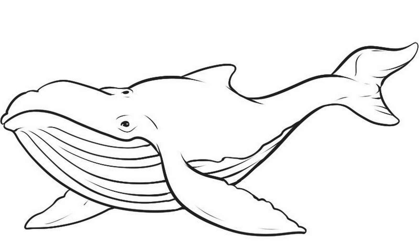 Dessin de baleine gratuit