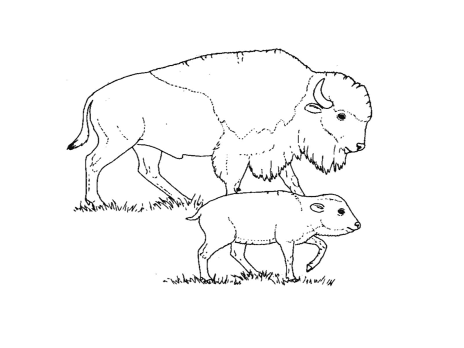 Coloriage et dessin yakari - Coloriage bison ...