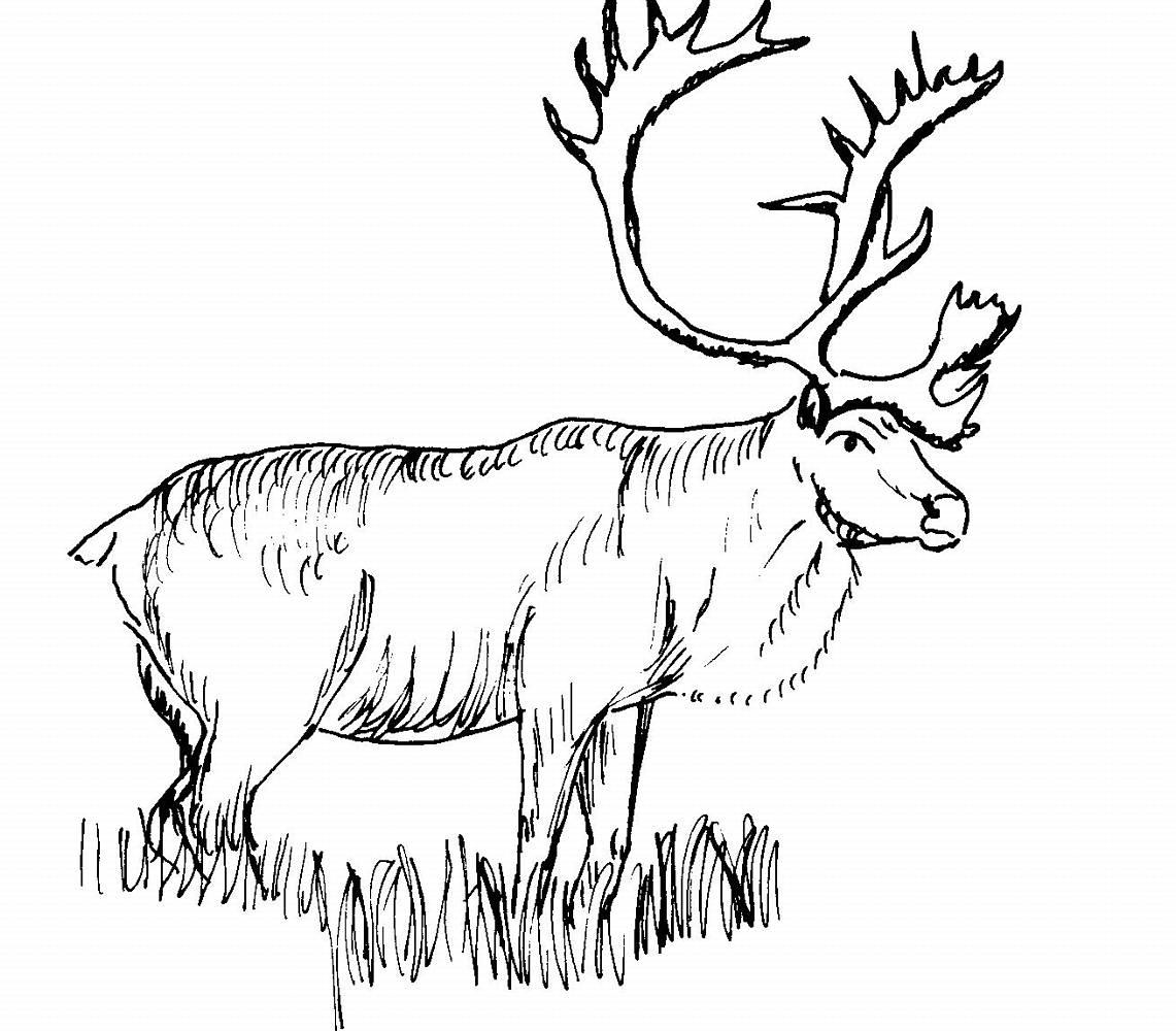 s lection de coloriage caribou imprimer sur laguerche com page 1