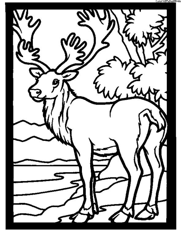 Slection de coloriage caribou imprimer sur LaGuerchecom Page 2