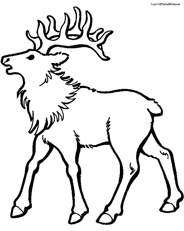 Slection de coloriage caribou imprimer sur LaGuerchecom Page 4