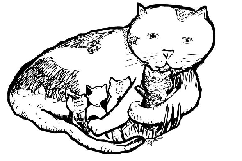 Jeux de coloriage chat
