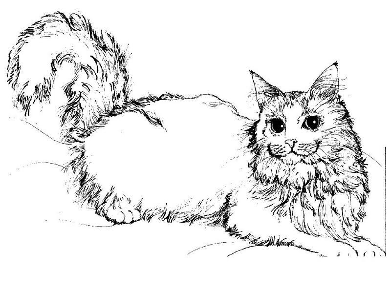 Dessin de chat à colorier et imprimer