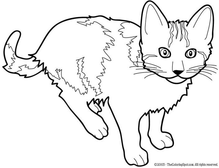 Dessin gratuit de chat a colorier