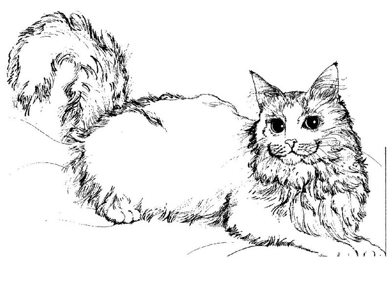 Image de chat a dessiner