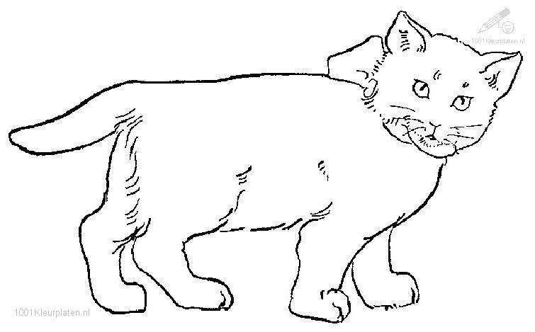 Coloriage gratuit de chat a imprimer