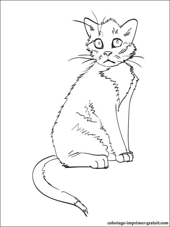 Dessin gratuit chat a colorier
