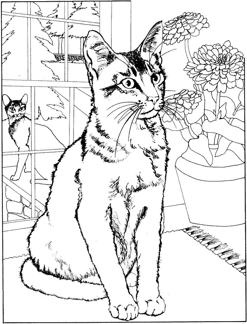 Coloriage de chat à imprimer
