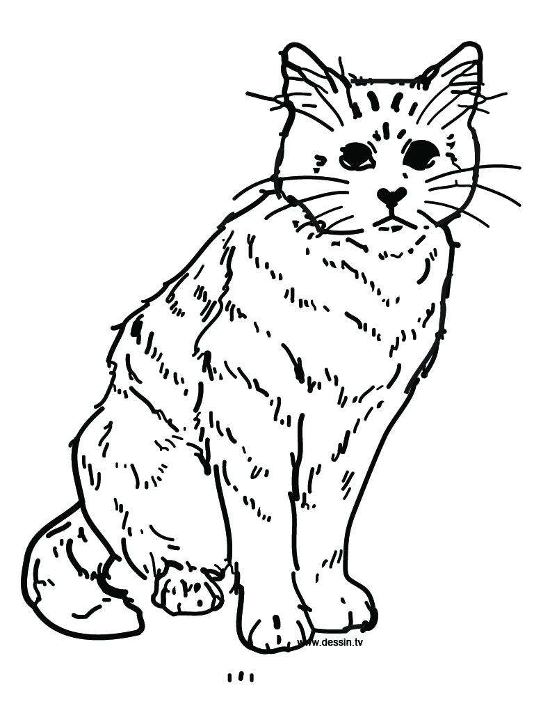 Dessin de chat gratuit