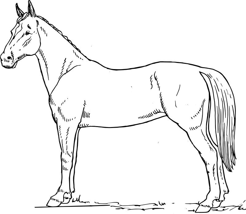 Dessin de cheval a colorier et imprimer