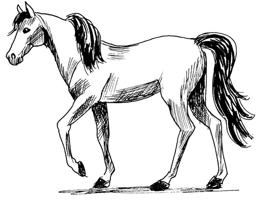 Dessin gratuit de cheval a imprimer et colorier