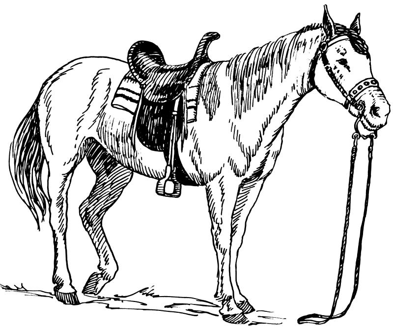 Dessin de cheval imprimer et colorier