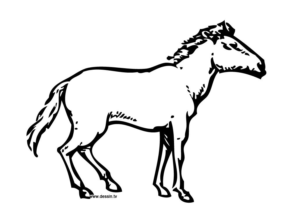 Coloriage de cheval imprimer et colorier