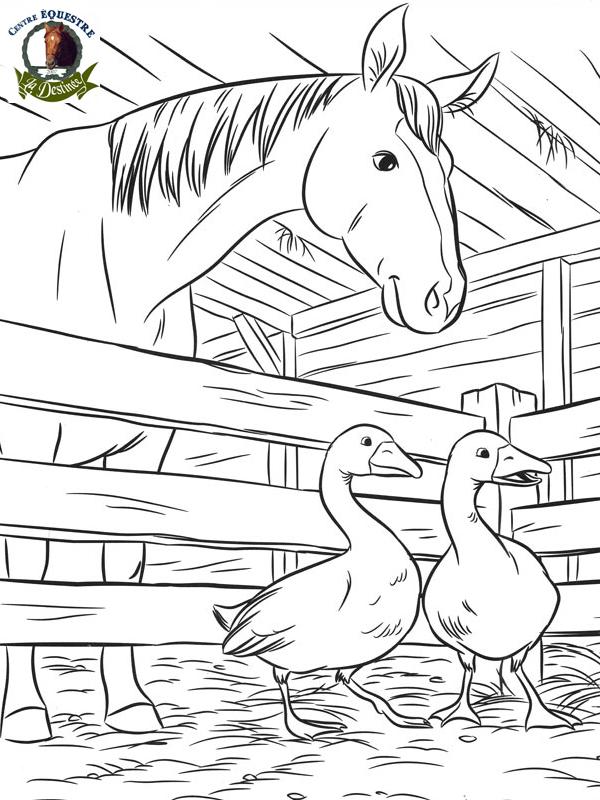 Dessin gratuit de cheval a colorier