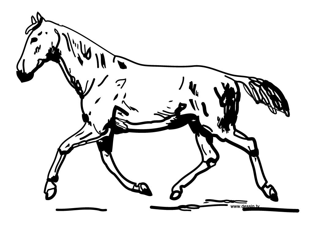 296 dessins de coloriage cheval imprimer sur page 27 - Coloriage de chevaux en ligne ...