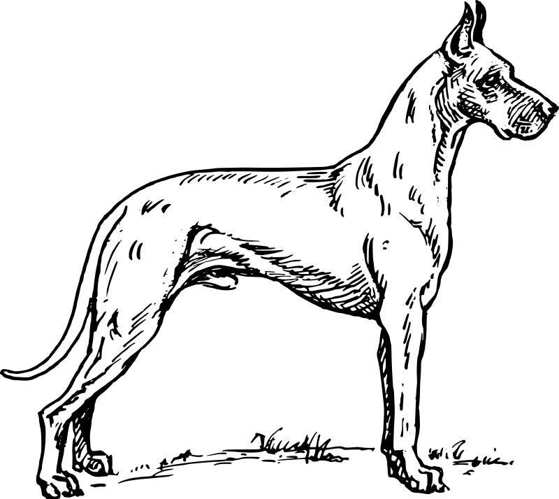 Coloriage gratuit de chien à imprimer