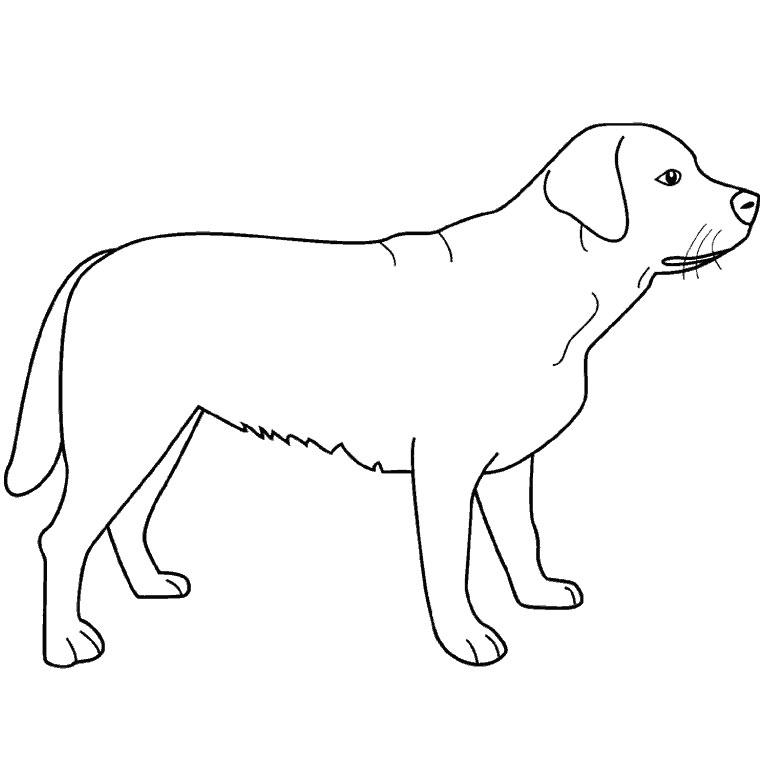 Dessin gratuit de chien a colorier